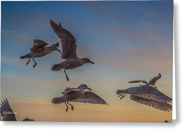 Gulls Greeting Cards - In Flight Greeting Card by Bill Roberts