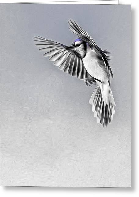 Oil Paint Digital Art Greeting Cards - In Flight Blue jay Greeting Card by Bill  Wakeley