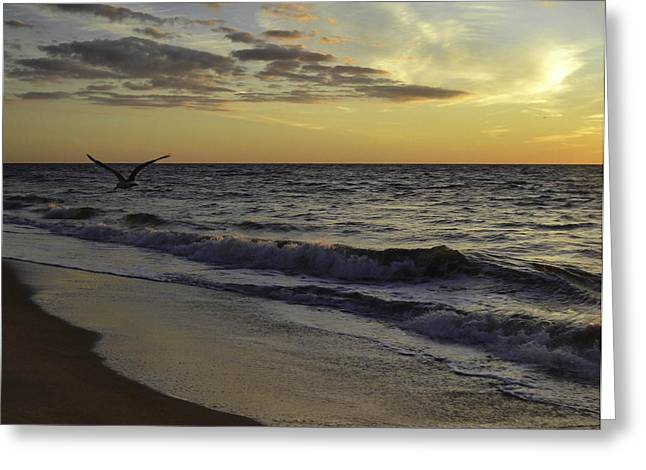 Para Surfing Greeting Cards - In Flight Greeting Card by Debra Bowers