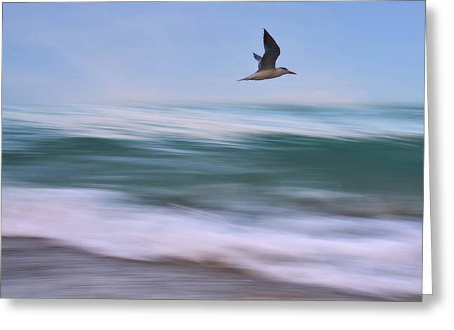 Florida House Greeting Cards - In Flight Greeting Card by Laura  Fasulo