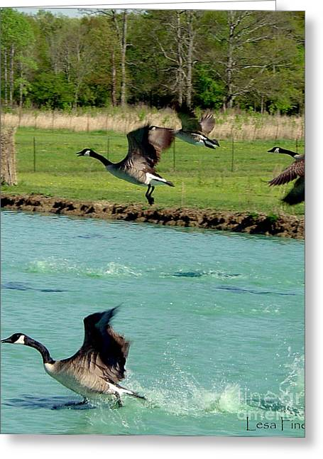 Canadian Geese In Flight Greeting Card by Lesa Fine