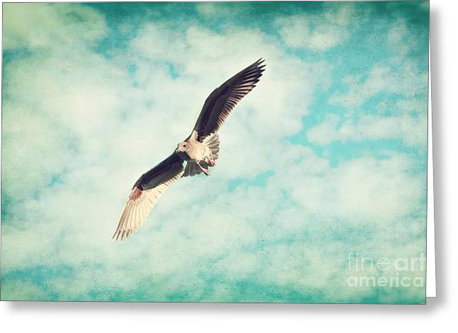 Flying Seagull Greeting Cards - In Flight Greeting Card by Sylvia Cook