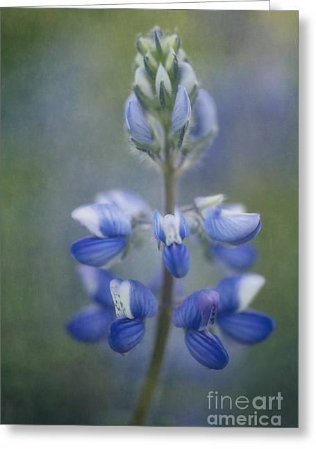 Makro Greeting Cards - In Full Bloom Greeting Card by Priska Wettstein