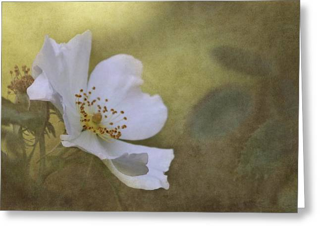 Textured Floral Greeting Cards - In Golden Light Greeting Card by Angie Vogel