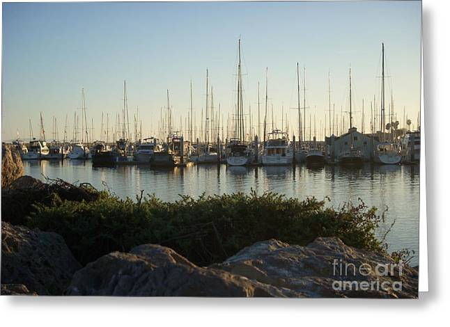 Sailboats In Harbor Greeting Cards - In Harbor Greeting Card by Amy Strong