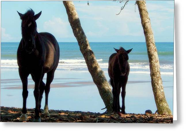 Wild Horses Greeting Cards - In Her Image Greeting Card by Karen Wiles