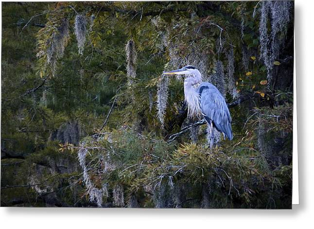 In His Element  Greeting Card by JC Findley