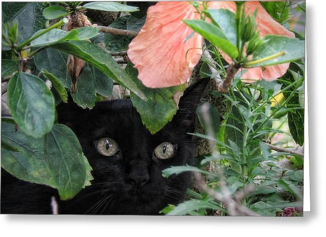 Peggy Hughes Greeting Cards - In His Jungle Greeting Card by Peggy J Hughes
