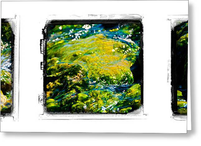 Alga Greeting Cards - In Hot Water Greeting Card by Tom Wenger