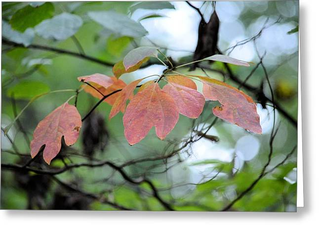 Dappled Light Greeting Cards - In Light of Autumn Greeting Card by Maria Urso