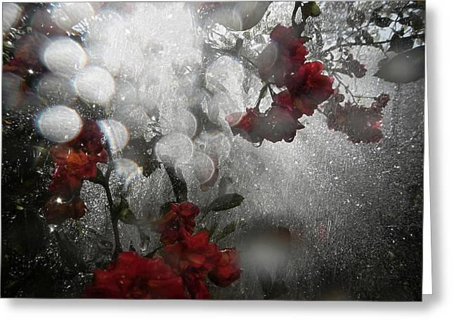 Morning Light In Rain Greeting Card by Renata Vogl