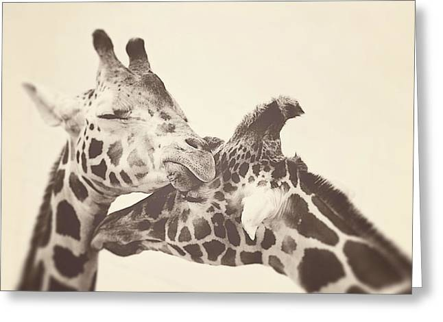 Giraffe Greeting Cards - In Love Greeting Card by Carrie Ann Grippo-Pike