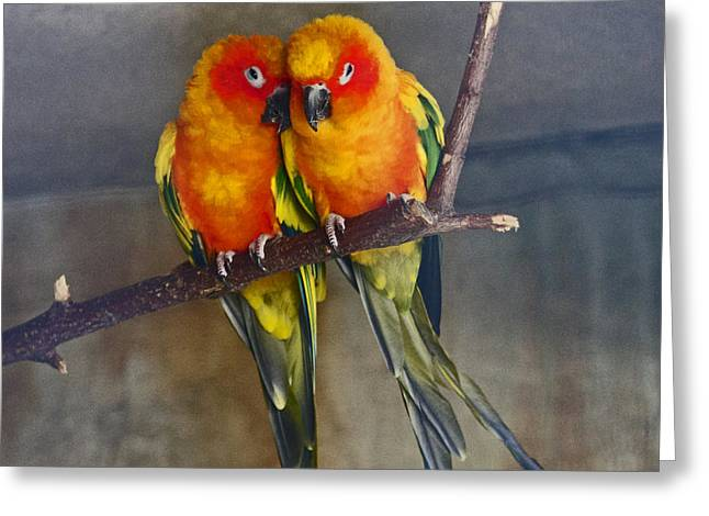 Parrot Pyrography Greeting Cards - In love Greeting Card by Lily K