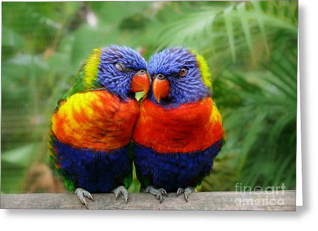 In Love Lorikeets Greeting Card by Peggy  Franz