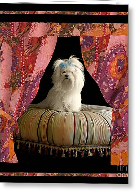 White Maltese Greeting Cards - In Memory of Ms Chloe - On Stage Greeting Card by Madeline Ellis