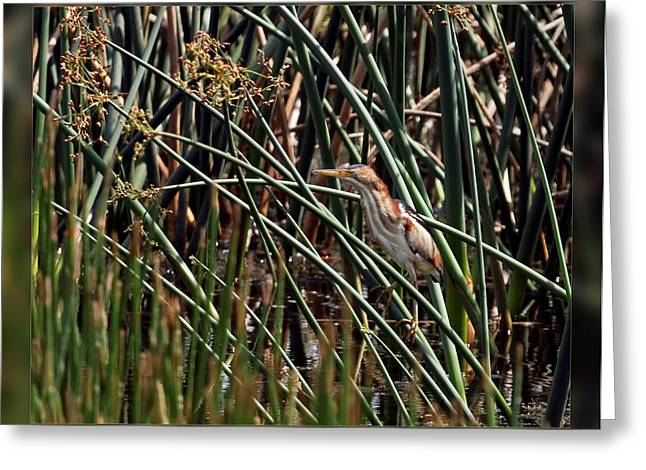 Bird Greeting Cards - In My Element Greeting Card by Dawn Currie