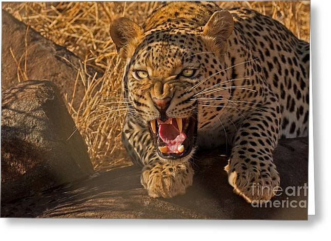 In No Uncertain Terms Greeting Card by Ashley Vincent
