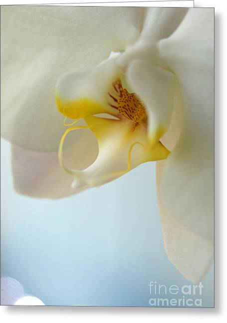 In Orchid Light  Greeting Card by Neal  Eslinger