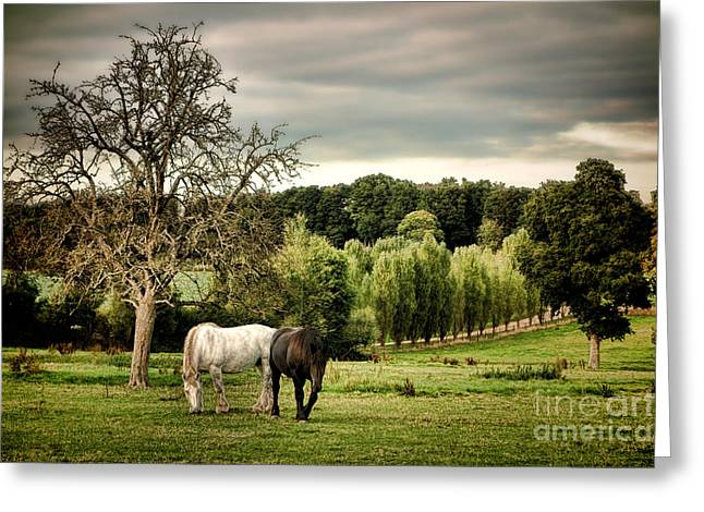 Draft Horse Greeting Cards - In Perche Greeting Card by Olivier Le Queinec