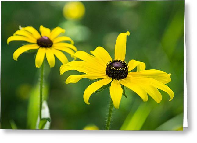 Wisconsin Wildflowers Greeting Cards - In Praise of Yellow Greeting Card by Bill Pevlor