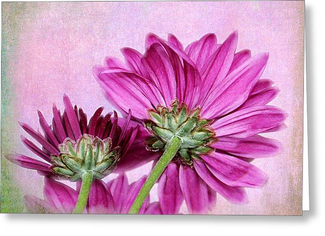In Reverse Greeting Card by Judy Vincent
