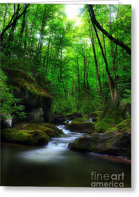 Flowing Stream Greeting Cards - In Search Of Greeting Card by Michael Eingle
