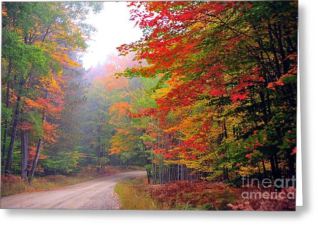 Fall Trees Greeting Cards - In the Autumn Forest Greeting Card by Terri Gostola