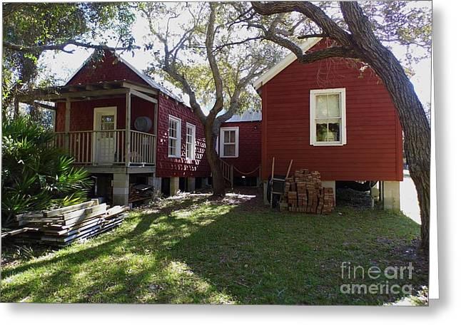 Cedar Key Greeting Cards - In The Back Yard Greeting Card by D Hackett
