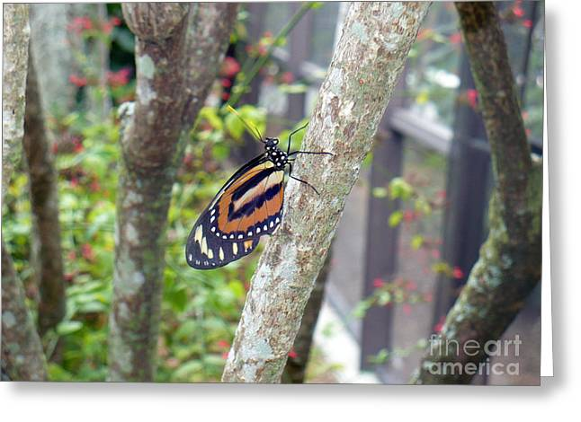 For Those Who Love Blue Greeting Cards - In The Bush Greeting Card by Kryztina Spence