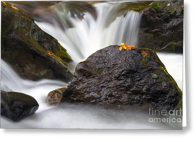 Stream Greeting Cards - In the Center of  it All Greeting Card by Mike Dawson