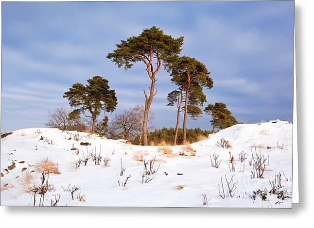 Gelderland Greeting Cards - In the center Greeting Card by Olha Rohulya