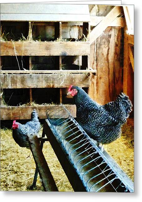 In The Chicken Coop Greeting Card by Susan Savad