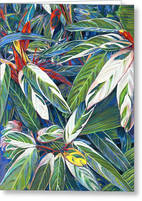 Birdseye Greeting Cards - In the Conservatory - stromanthe sanguinea Greeting Card by Nick Payne