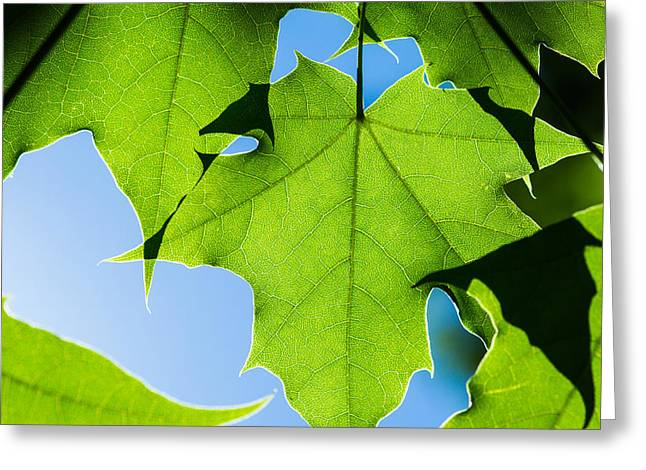 Fresh Green Greeting Cards - In The Cooling Shade - Featured 3 Greeting Card by Alexander Senin