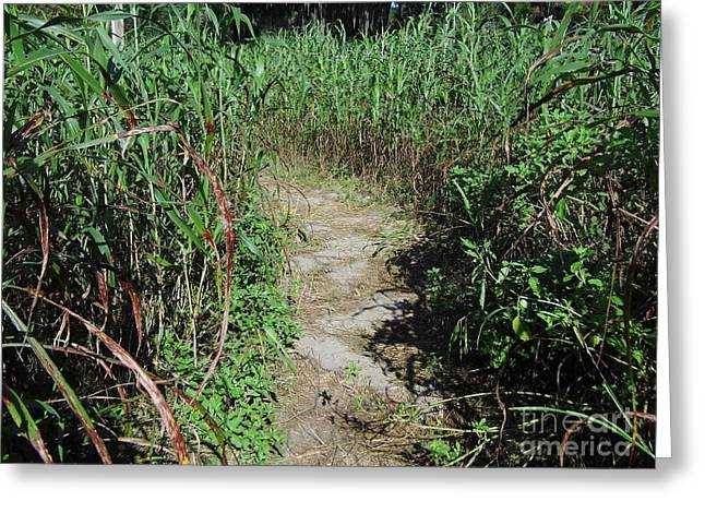 Hayride Greeting Cards - In The Corn Maze Greeting Card by D Hackett