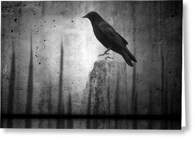 Crow Image Greeting Cards - In The Dark Greeting Card by Gothicolors Donna Snyder