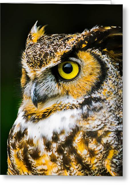 Owl Photography Greeting Cards - In The Eyes Greeting Card by Parker Cunningham