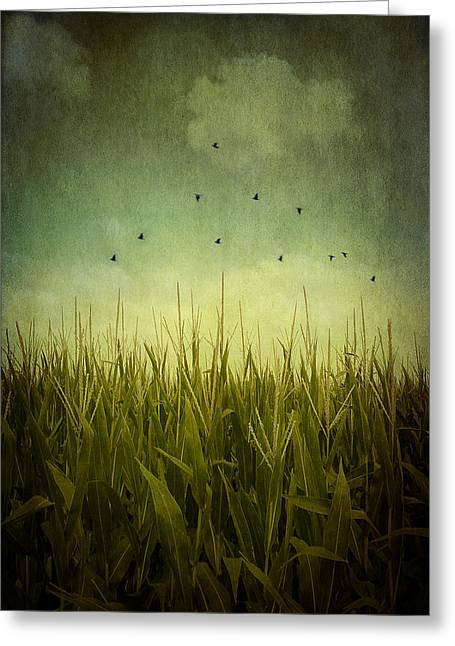 Healthy Greeting Cards - In the Field Greeting Card by Trish Mistric