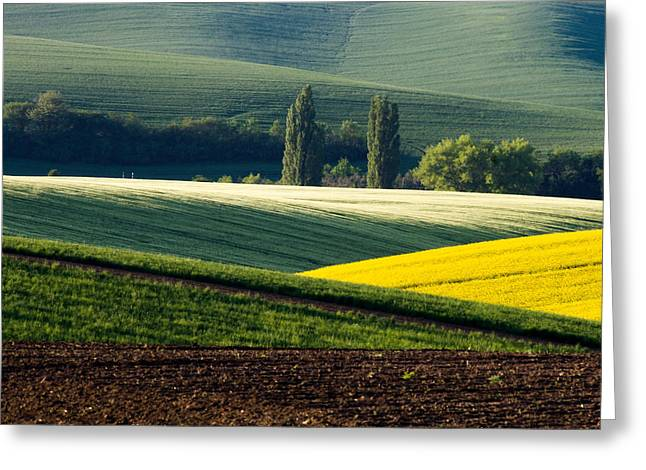 Moravia Greeting Cards - In the fields Greeting Card by Marta Grabska-Press