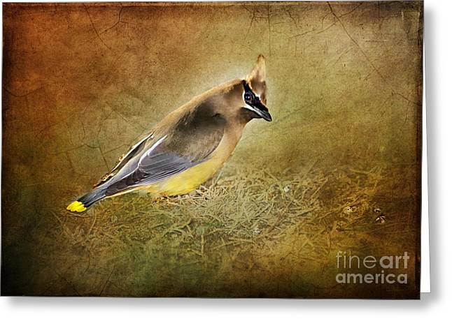 Cedar Waxwing Greeting Cards - In the Forest Greeting Card by Betty LaRue