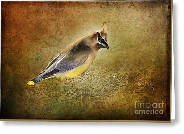 Cedar Waxwings Greeting Cards - In the Forest Greeting Card by Betty LaRue