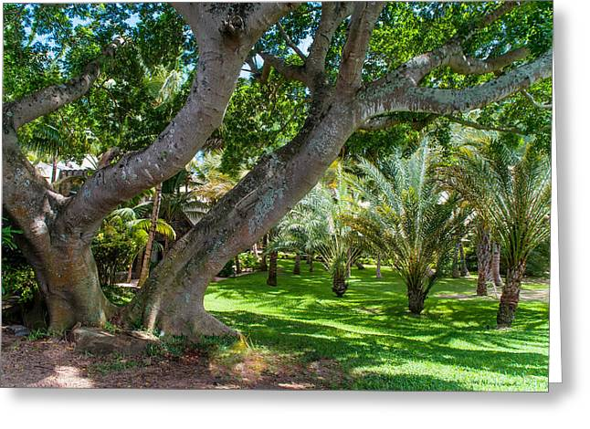In The Garden. Mauritius Greeting Card by Jenny Rainbow