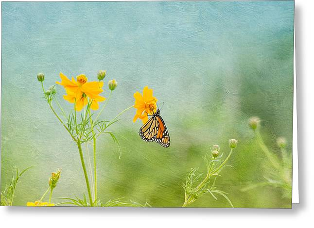 Charming Cottage Greeting Cards - In The Garden - Monarch Butterfly Greeting Card by Kim Hojnacki