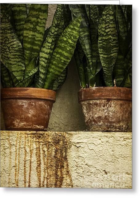 House Plants Greeting Cards - In The Green House Greeting Card by Margie Hurwich