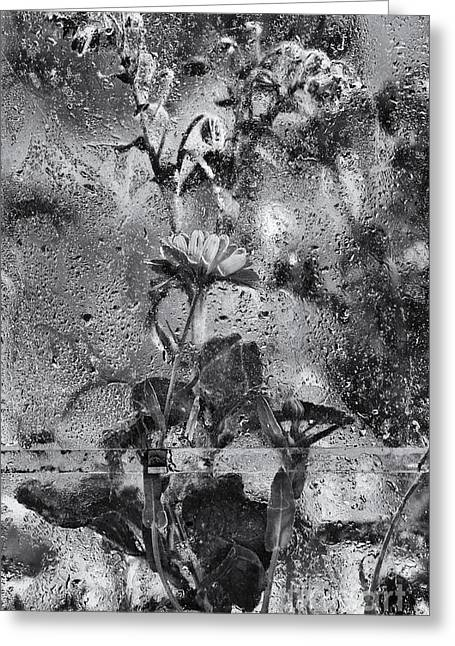 Glass Flowers And Leaves Greeting Cards - In The Greenhouse  Greeting Card by Tim Gainey