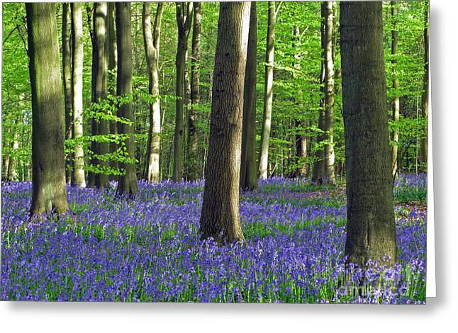 New Britain Digital Art Greeting Cards - In the Heart of the Bluebell Woods Greeting Card by Elizabeth Debenham