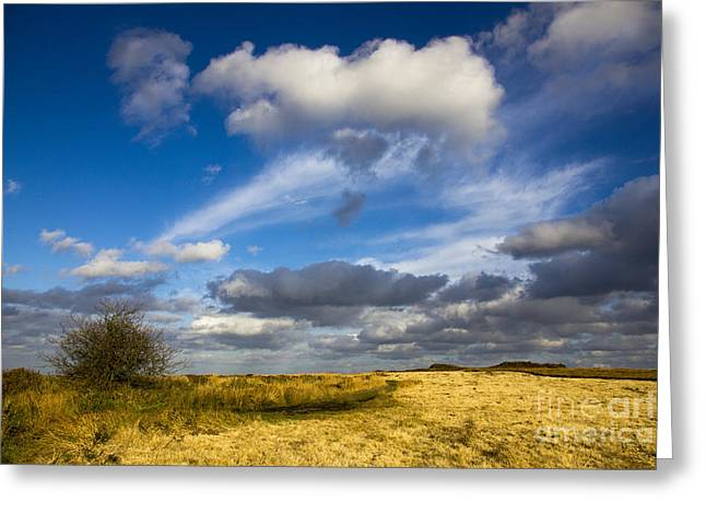 Lanscape Greeting Cards - In The Heights Of Brittany Greeting Card by Sophie De Roumanie
