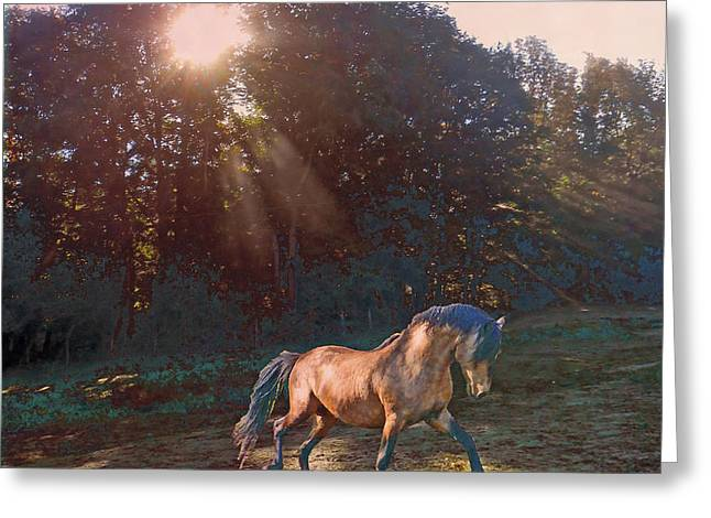Paso Fino Stallion Greeting Cards - In The Light Greeting Card by Patricia Keller