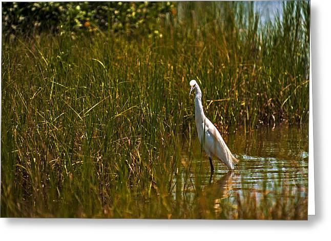 Water Fowl Greeting Cards - In the Marsh Greeting Card by Kevan Garecki