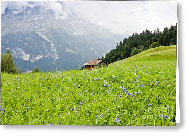 Swiss Photographs Greeting Cards - In the Meadow Greeting Card by Finesse Fine Art